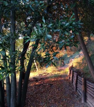 Passeggiando nel parco, un pomeriggio d'ottobre