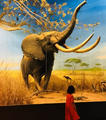 Al Museo di Storia Naturale