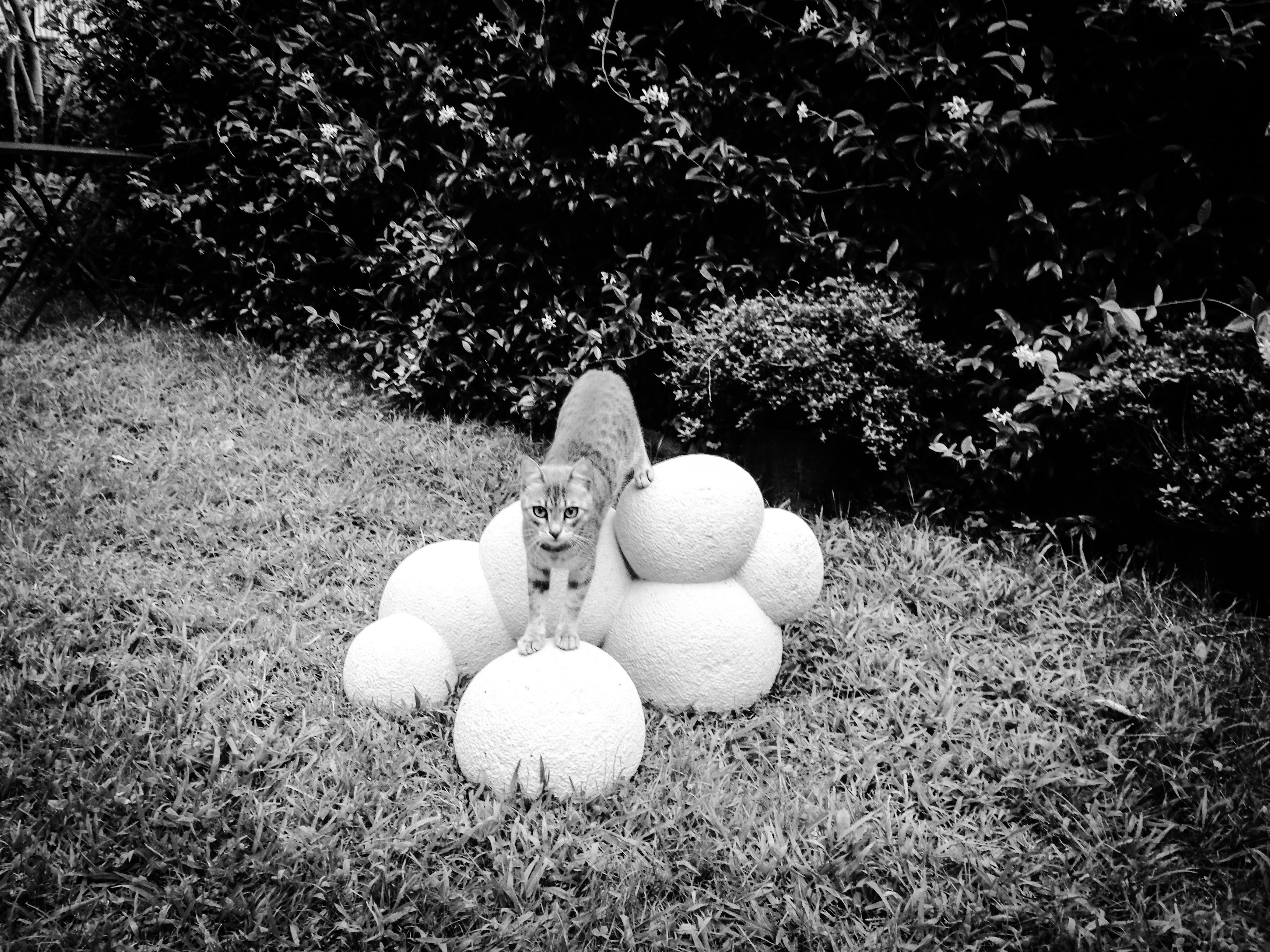 gatto su scultura Lorenzelli