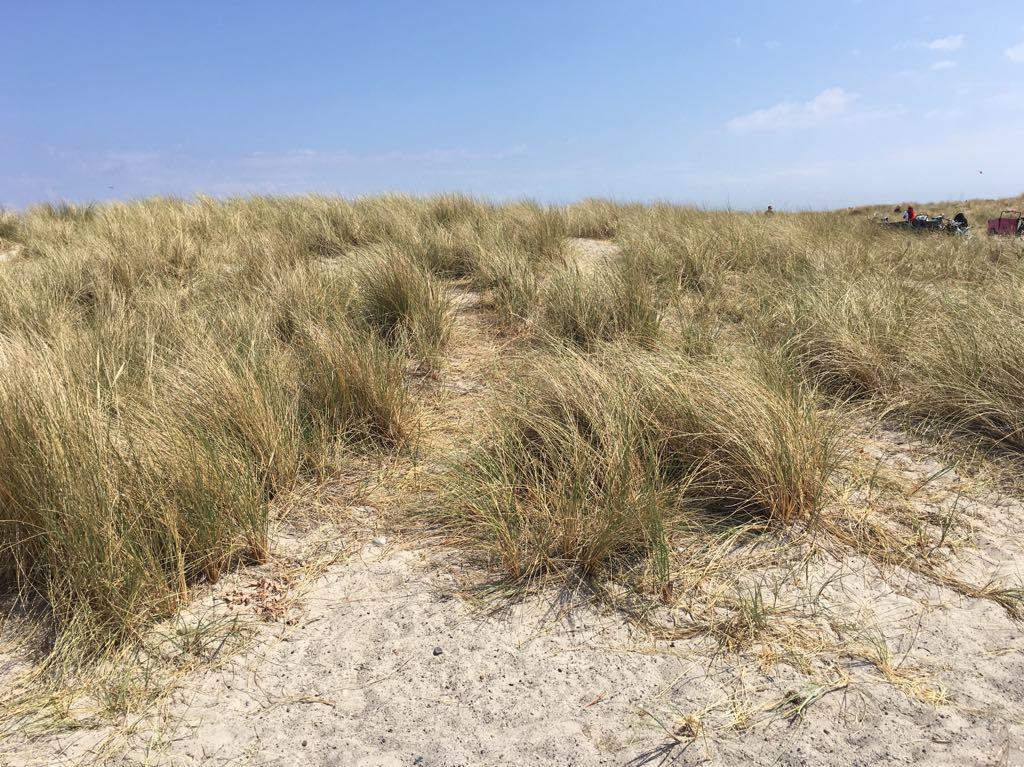 vegetazione arida amager park