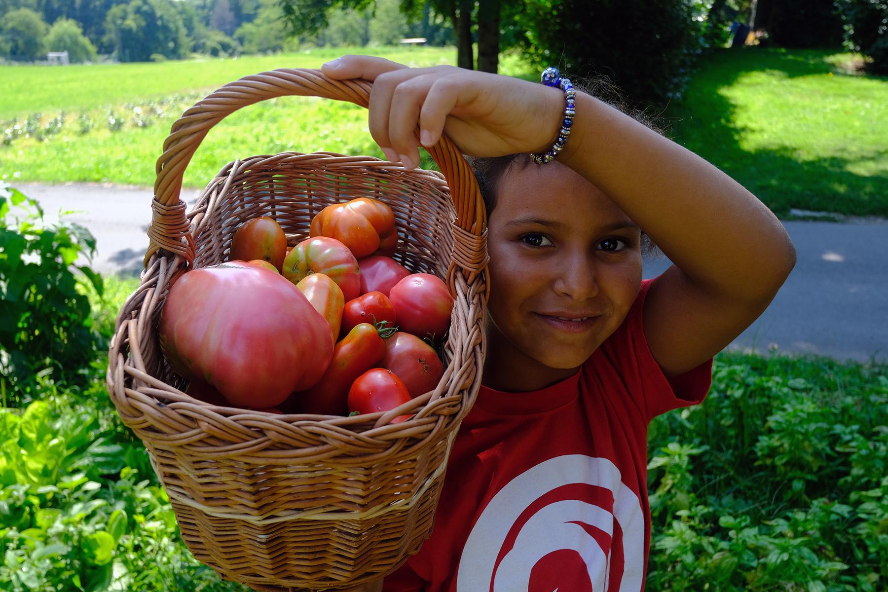 Hamma (repubblica saharawi) nell'orto con i pomodori